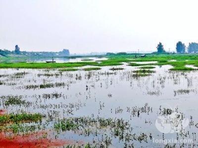 湖南益阳大通湖小龙虾上市啦,今年面积将达14万亩
