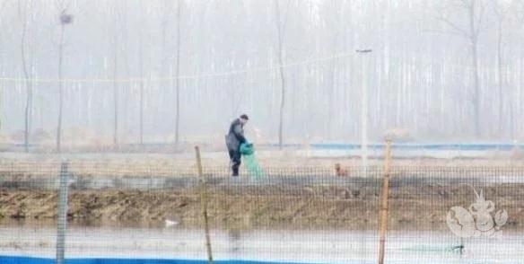 霍邱县彭塔乡掀起小龙虾养殖热潮