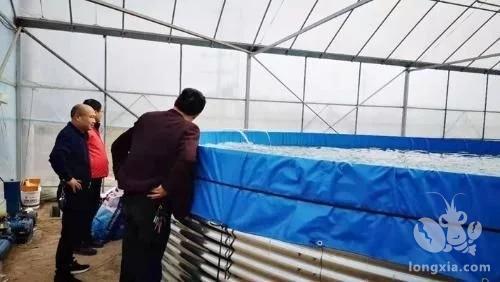 省邓家埠水稻原种场杨家分场支持引导职工发展大棚小龙虾示范养殖