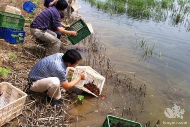 大家抱怨小龙虾一天一个价,主要原因是养小龙虾损耗太大!
