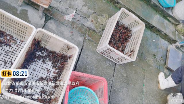 涨到爆了!小龙虾一周猛涨19元/斤,两虾最高涨到50元/斤