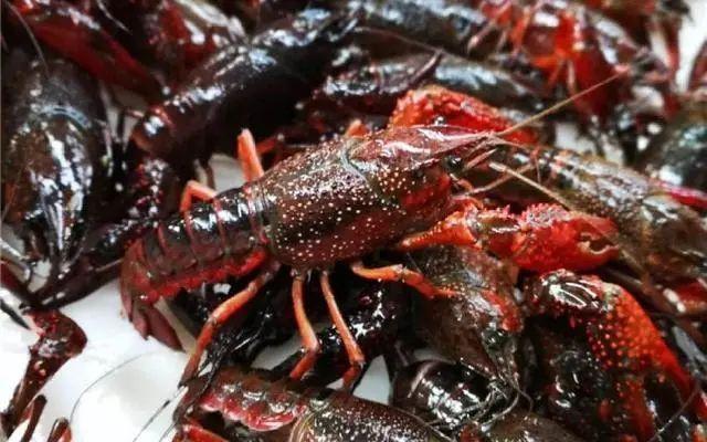 记住这五点,小龙虾生长更快 三农服务热线