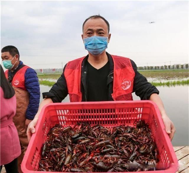 小龙虾主产区养殖技术调研座谈会在汉召开 虾稻共作后又有新技术