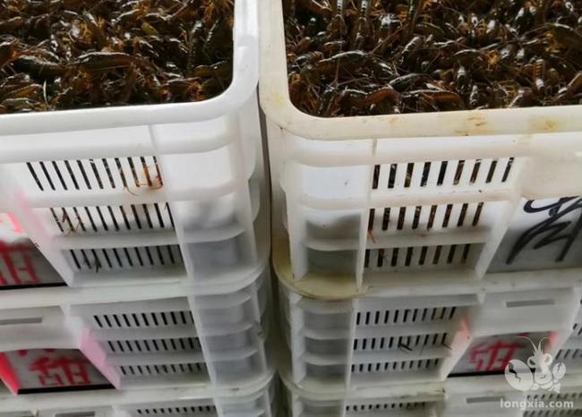 湖北小龙虾,正撬动农旅产业深度融合