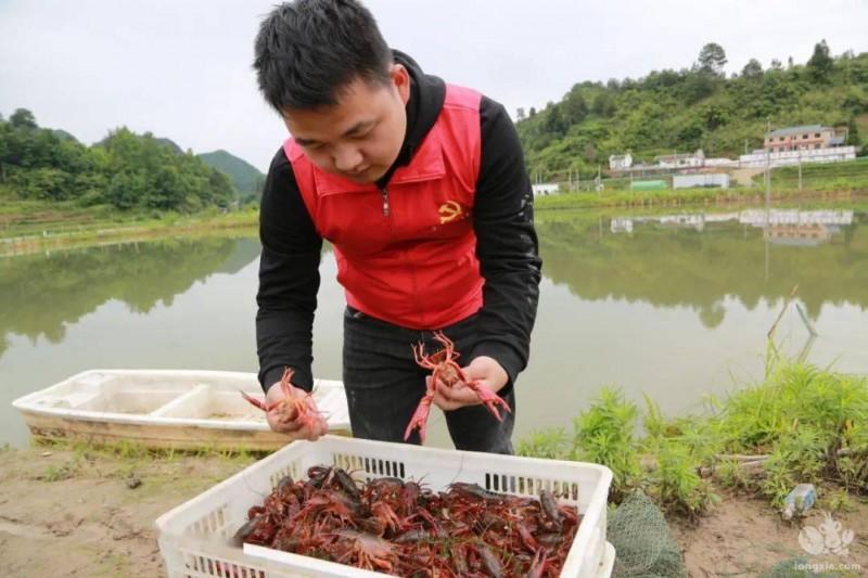 小龙虾脱壳期如何管理