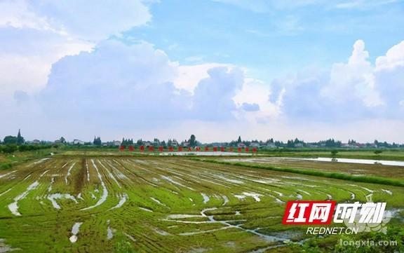 罗讯:优化种养经营模式 助推稻虾产业高质量发展