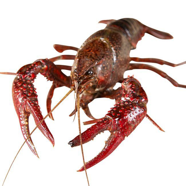 小龙虾养殖五项重点水质指标分析与调控