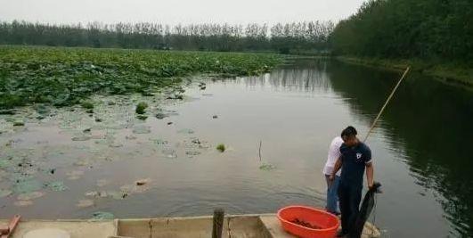 正常一亩田能产多少斤龙虾?
