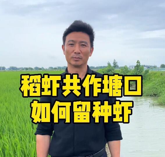 稻虾共作塘口如何留种虾?