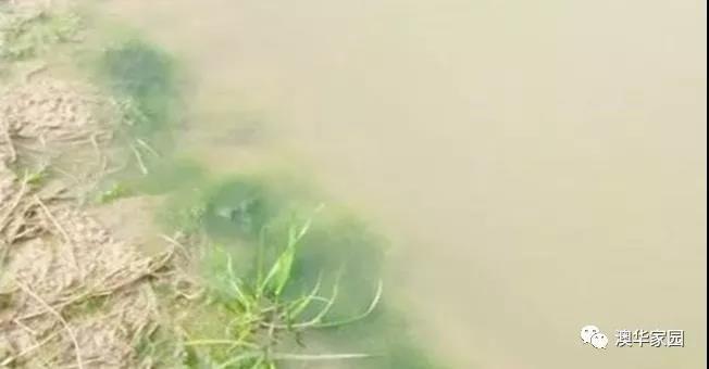 夏季雨汛期,健康高效养殖不得不注意这两点!