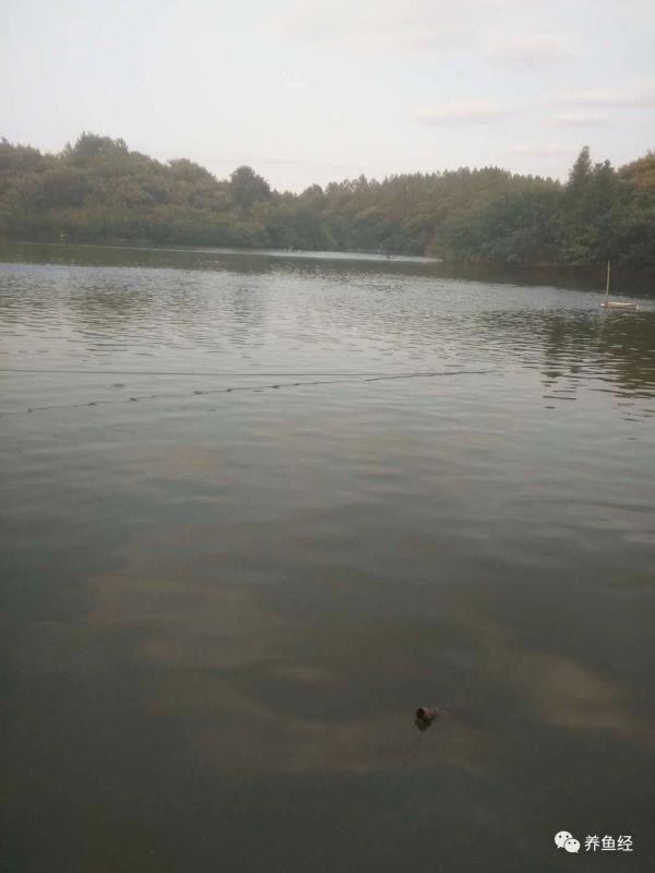 池塘水面下风口一层油膜怎么处理
