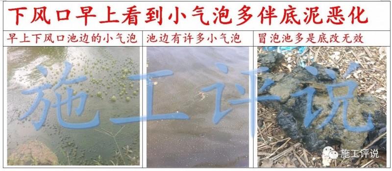 季高温季节池塘下风口为什么会看到一些小泡泡,有什么危害?