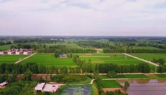 息县长源生态养殖专业合作社:虾稻共养 生态养殖品质高