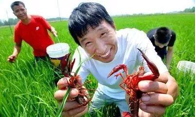 入行须知!小龙虾一年12个月周期表及养殖误区,苗种、水质、投饵、日常管理全有了