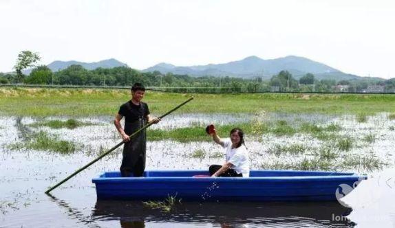 """江苏扬州""""一稻三虾""""技术让亩均收益超万元"""
