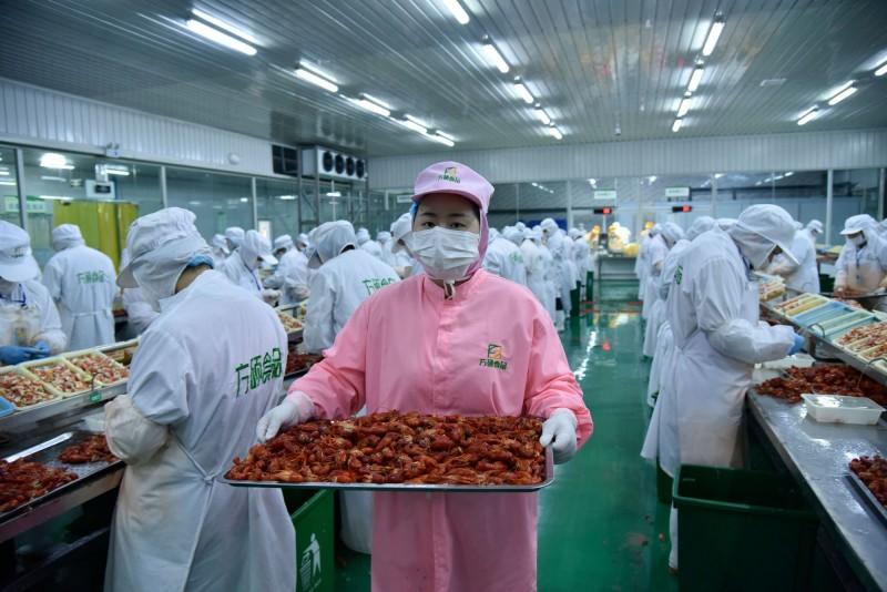 小龙虾托起贫瘠土地上的致富丰碑——安徽霍邱县发展稻虾产业助力